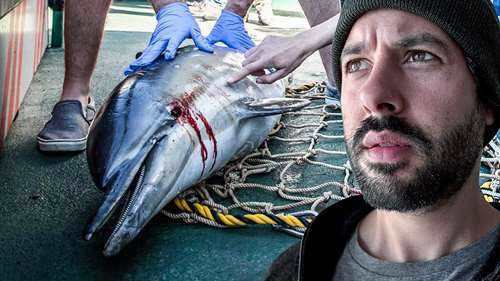 Pourquoi les dauphins meurent || Libreplay, 1re plateforme de référencement et streaming de films et séries libre de droits et indépendants.